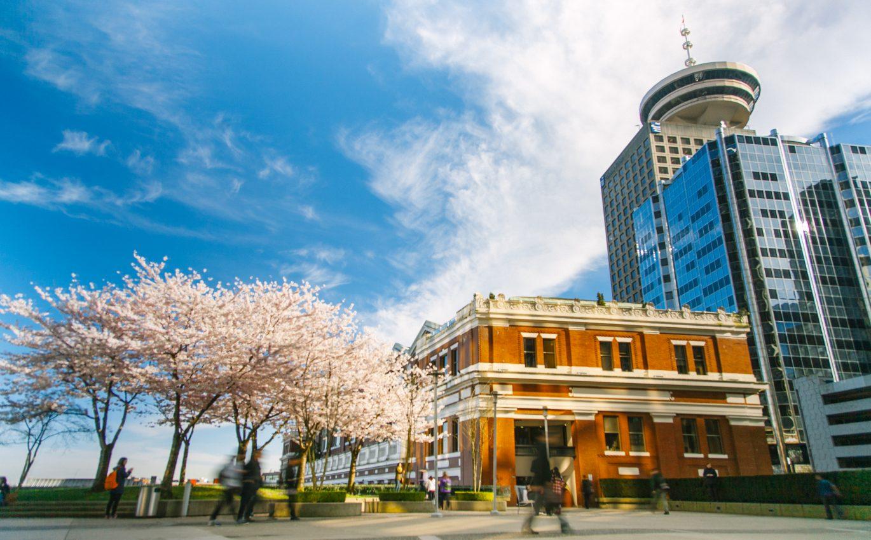 Ketika Sakura Berbunga