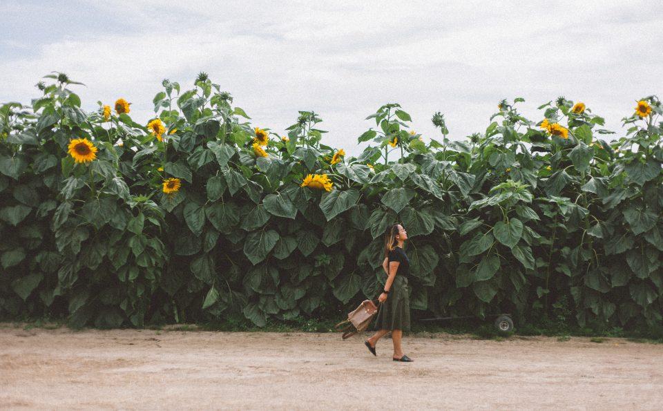 Festival Bunga Matahari 2019