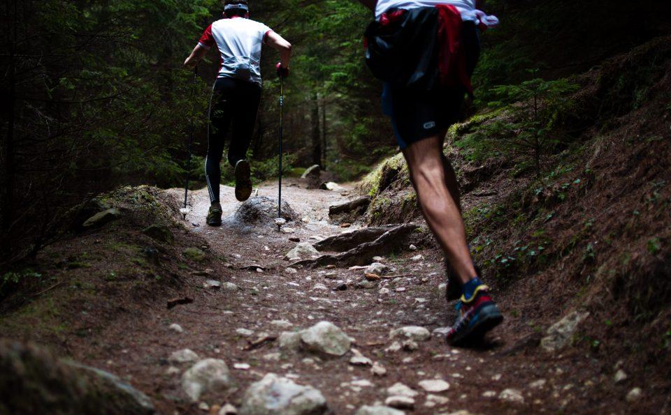 Berlari Meniti Hutan