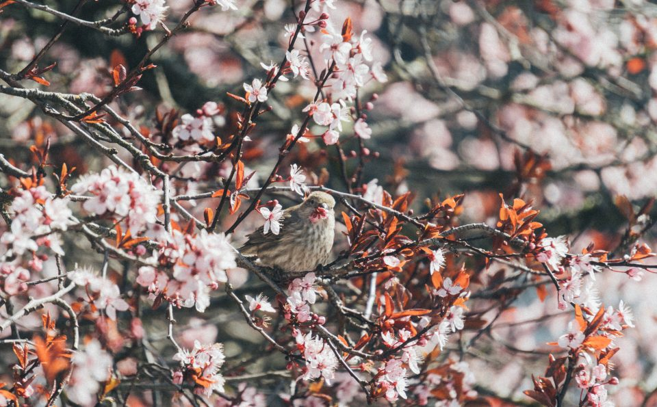 The Cycle of Spring – Rabindranath Tagore